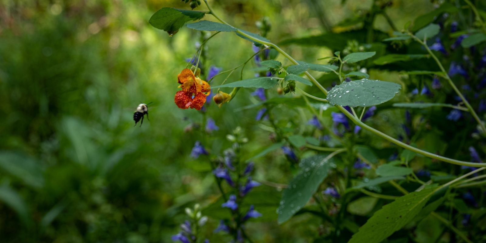 Bee hovering next to flower amoung greenery